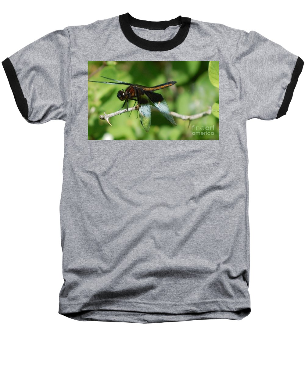 Digitall Photo Baseball T-Shirt featuring the photograph Dragon Fly by David Lane