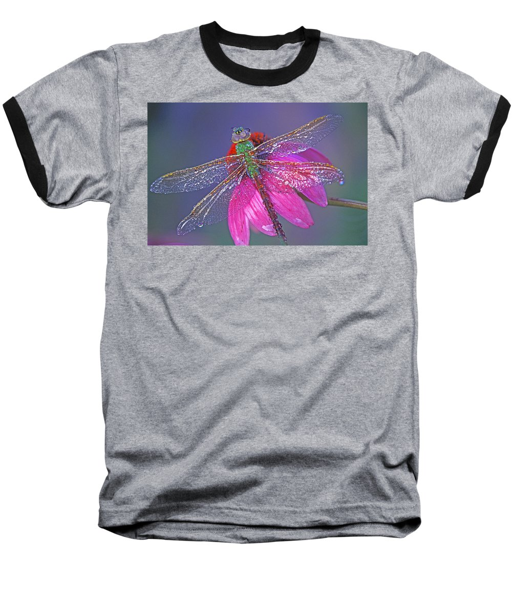 Dew Covered Dragonfly Rests On Purple Cone Flower Baseball T-Shirt featuring the photograph Dreaming Dragon by Bill Morgenstern