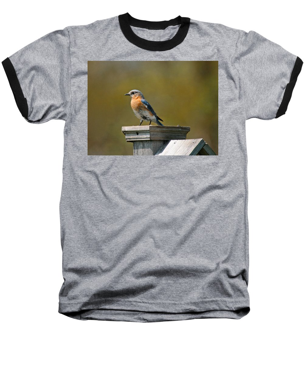 Blue Bird Baseball T-Shirt featuring the photograph Eastern Blue Bird by Robert Pearson