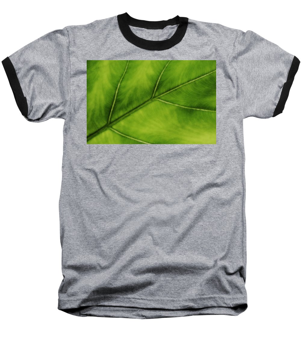 Leaf Baseball T-Shirt featuring the photograph Elephant Ear by Marilyn Hunt