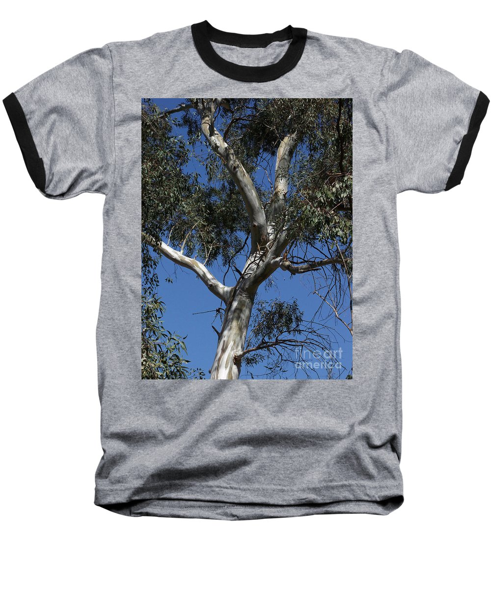 Trees Baseball T-Shirt featuring the photograph Eucalyptus by Kathy McClure
