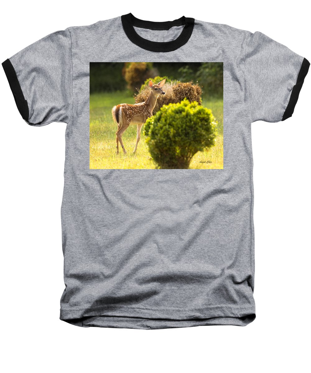 Fawn Baseball T-Shirt featuring the photograph Fawn by Angel Cher