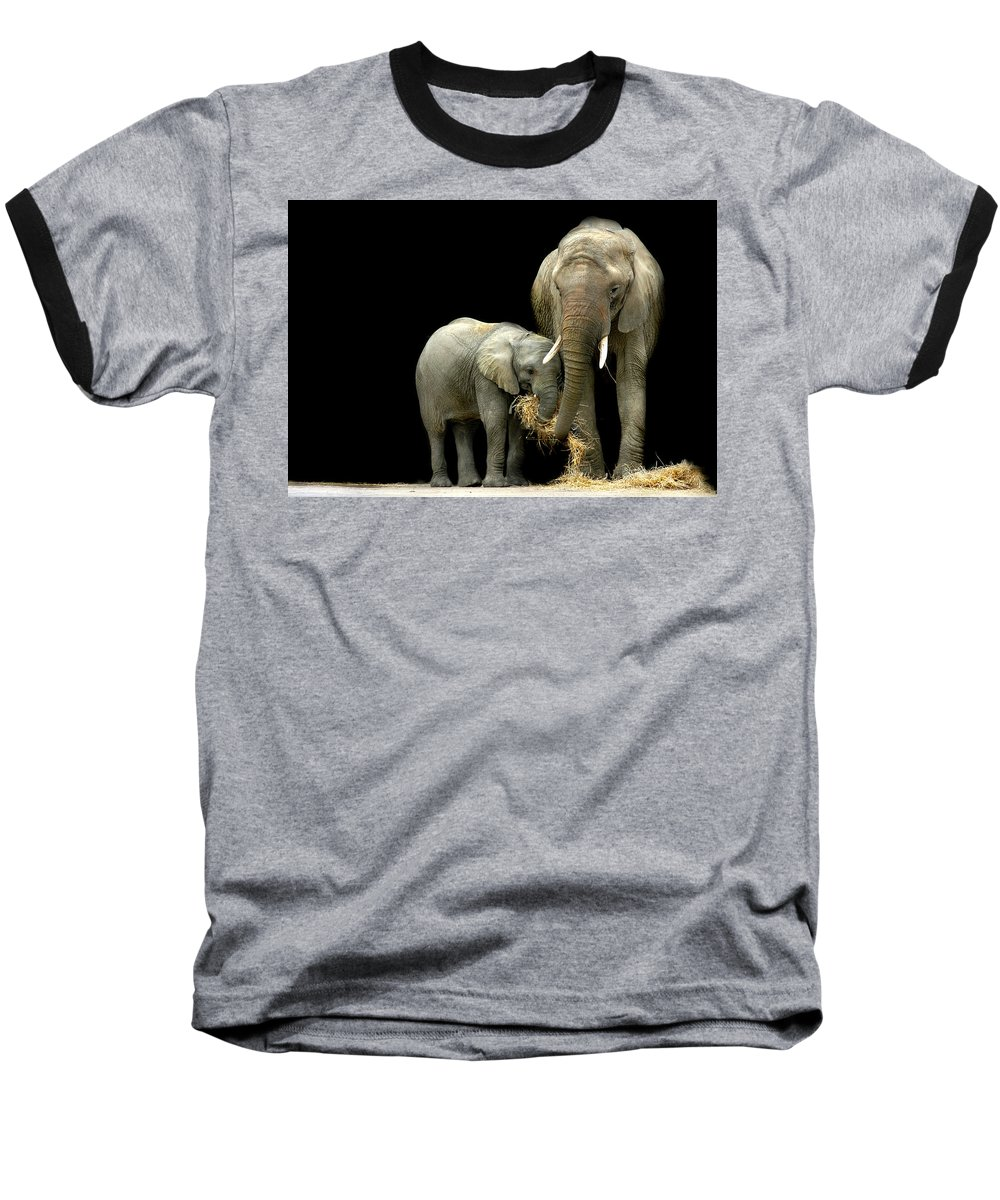 Elephant Baseball T-Shirt featuring the photograph Feeding Time by Stephie Butler