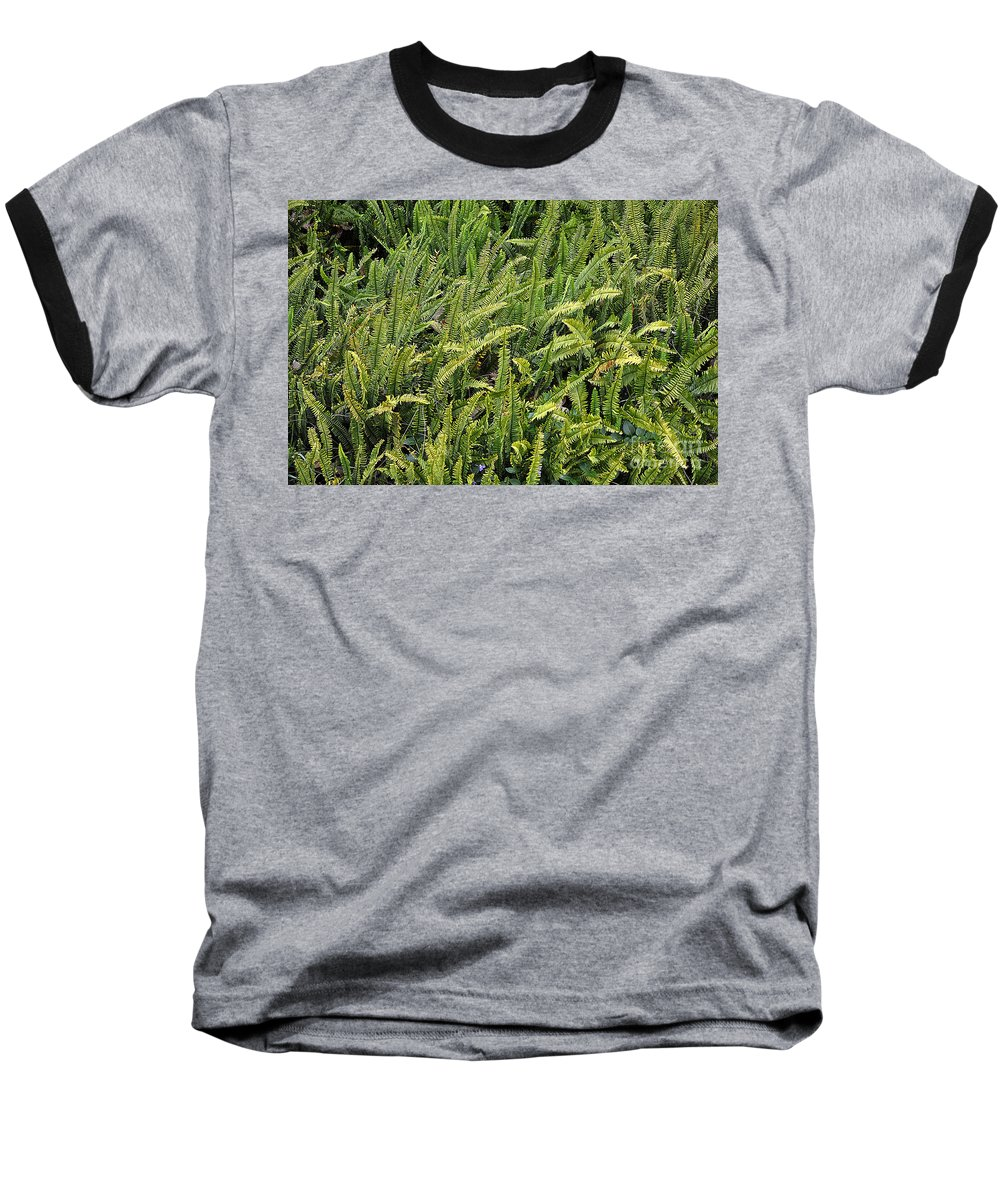 Clay Baseball T-Shirt featuring the photograph Fern by Clayton Bruster