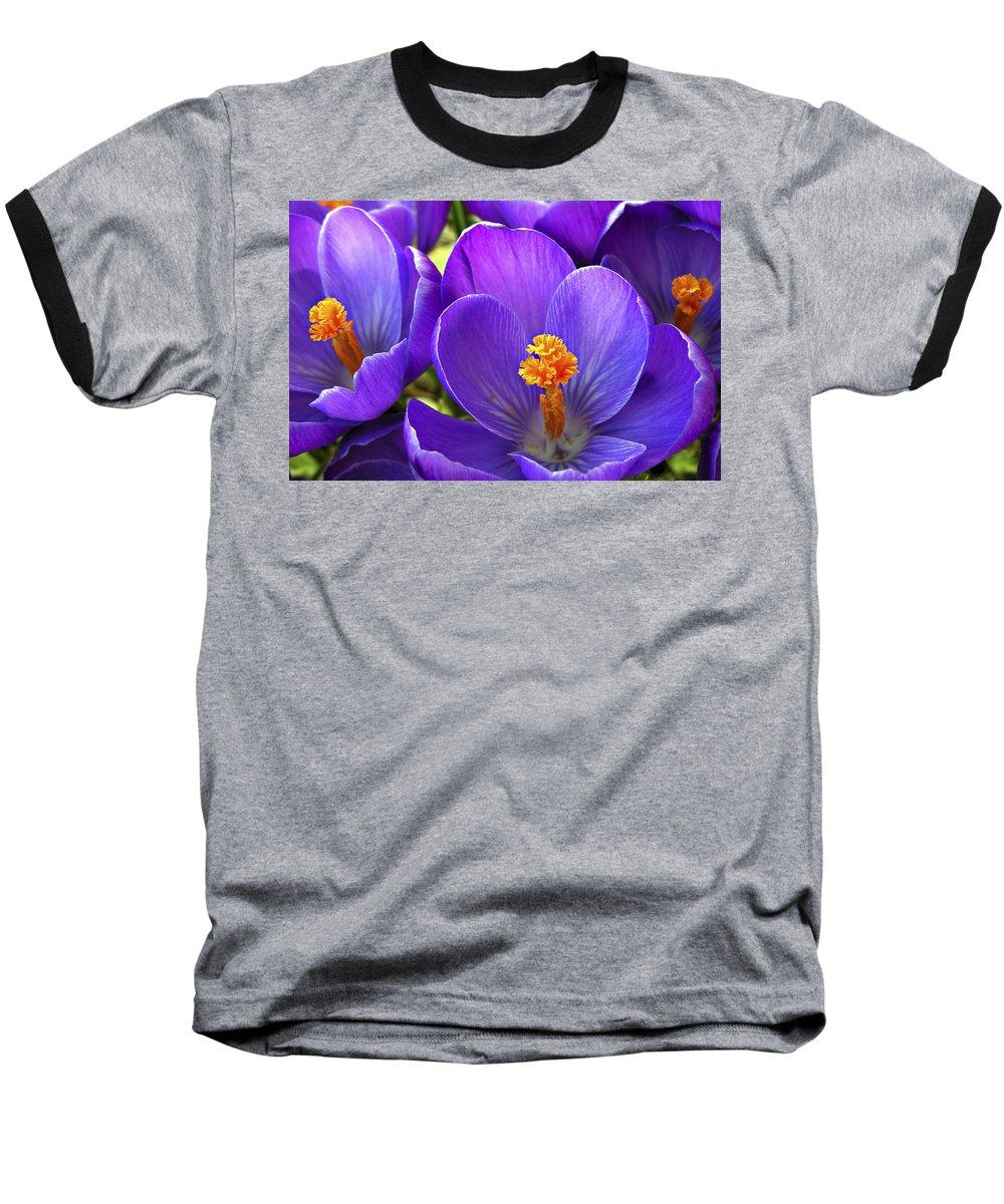 Flower Baseball T-Shirt featuring the photograph First Crocus by Marilyn Hunt