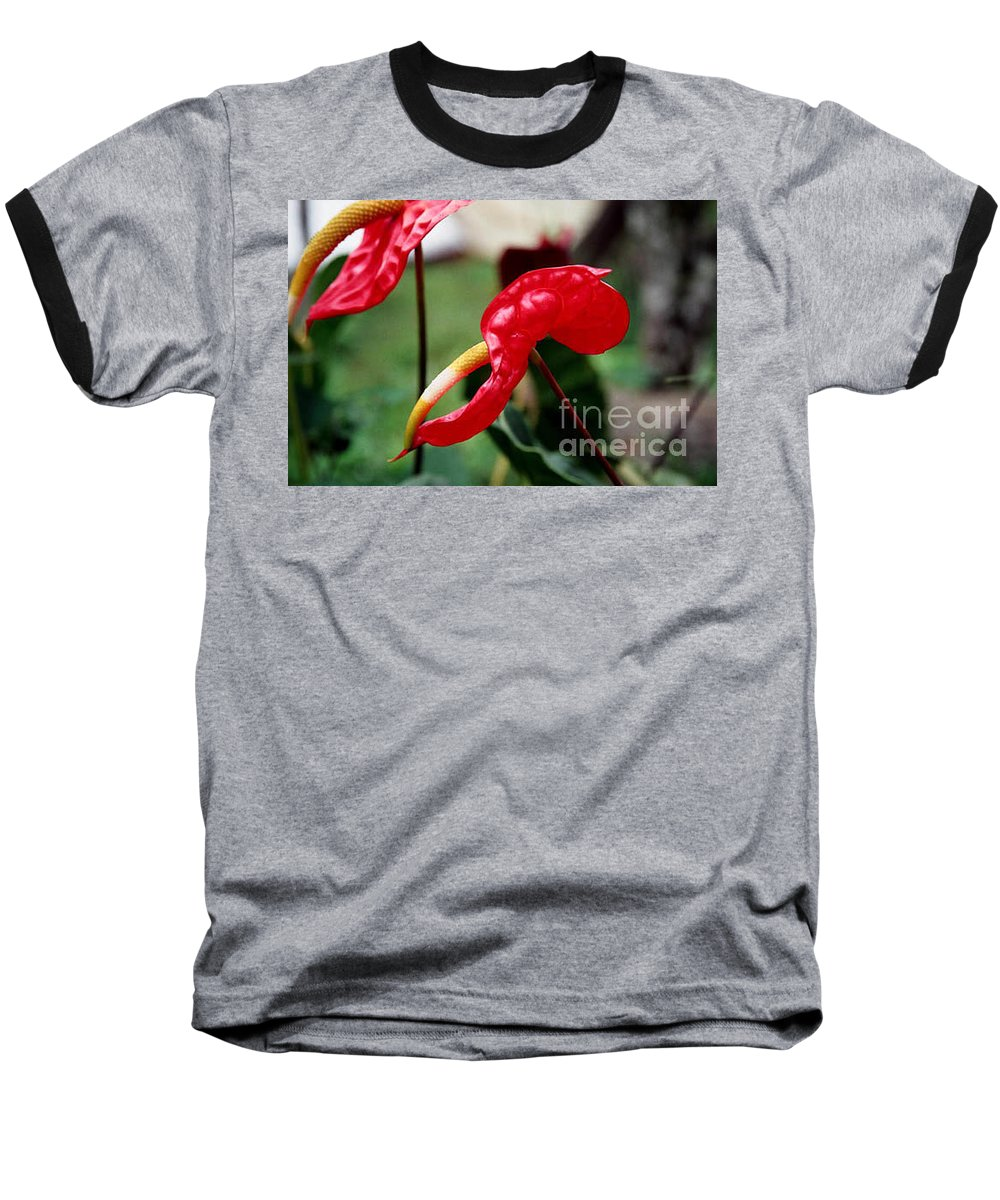 Exotic Flowers Baseball T-Shirt featuring the photograph Flamingo Flower by Kathy McClure