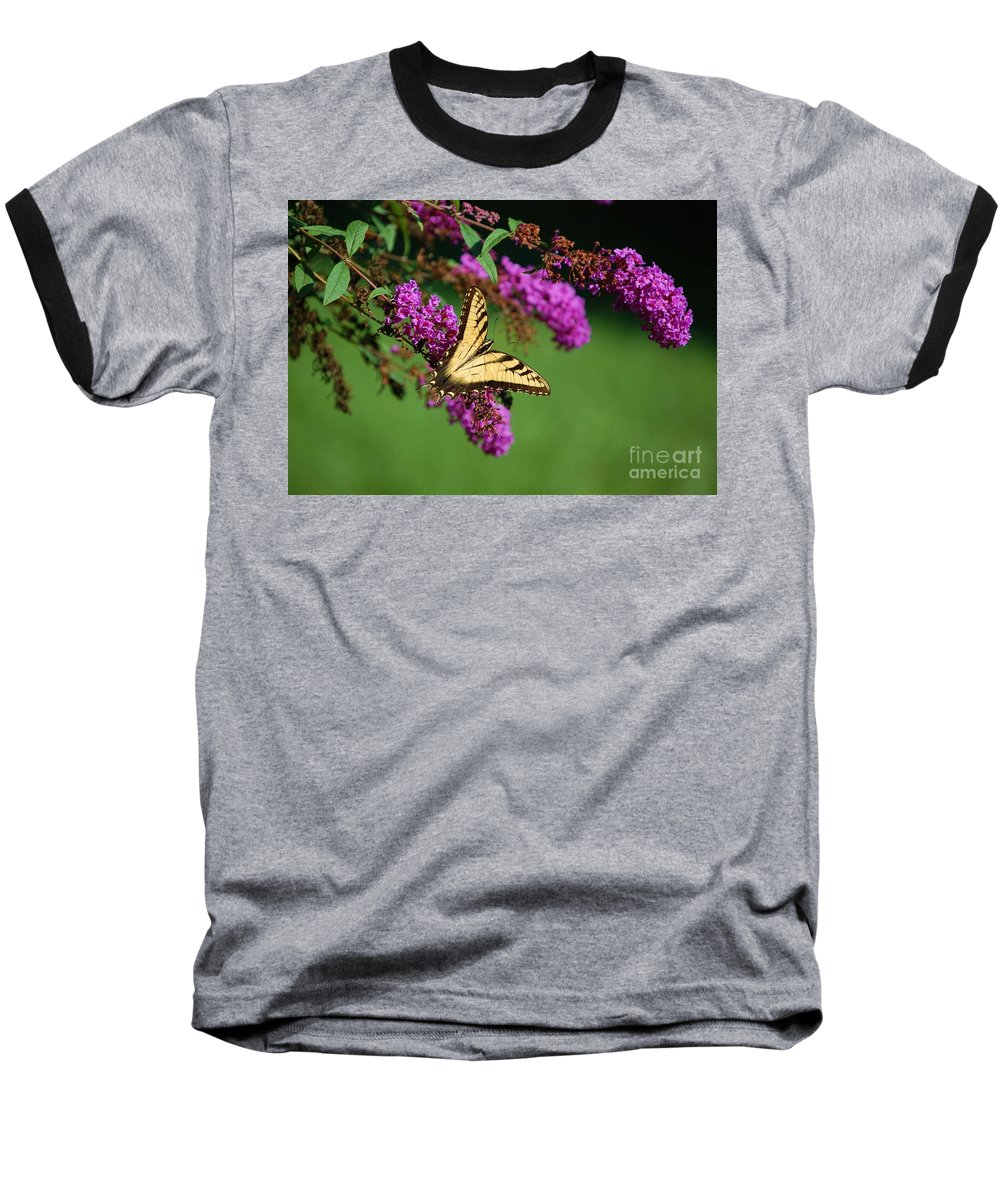 Butterfly Baseball T-Shirt featuring the photograph Freedom by Debbi Granruth