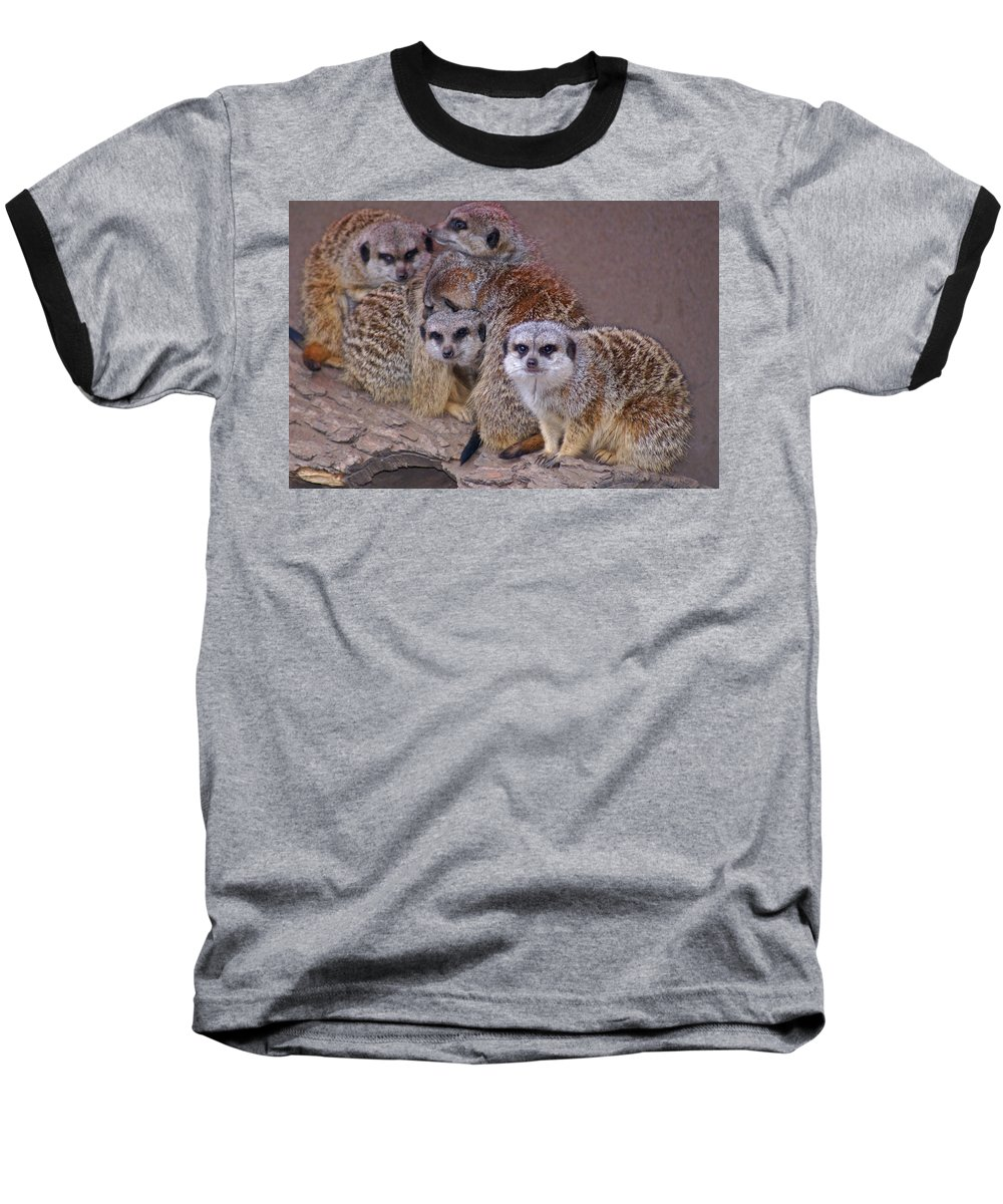 Mer Cats Baseball T-Shirt featuring the photograph Freezing Meer Cats by Heather Coen