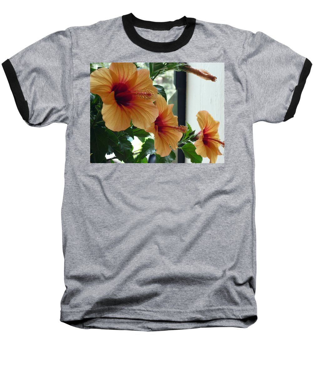Photography Flower Floral Bloom Hibiscus Peach Baseball T-Shirt featuring the photograph Friends For A Day by Karin Dawn Kelshall- Best