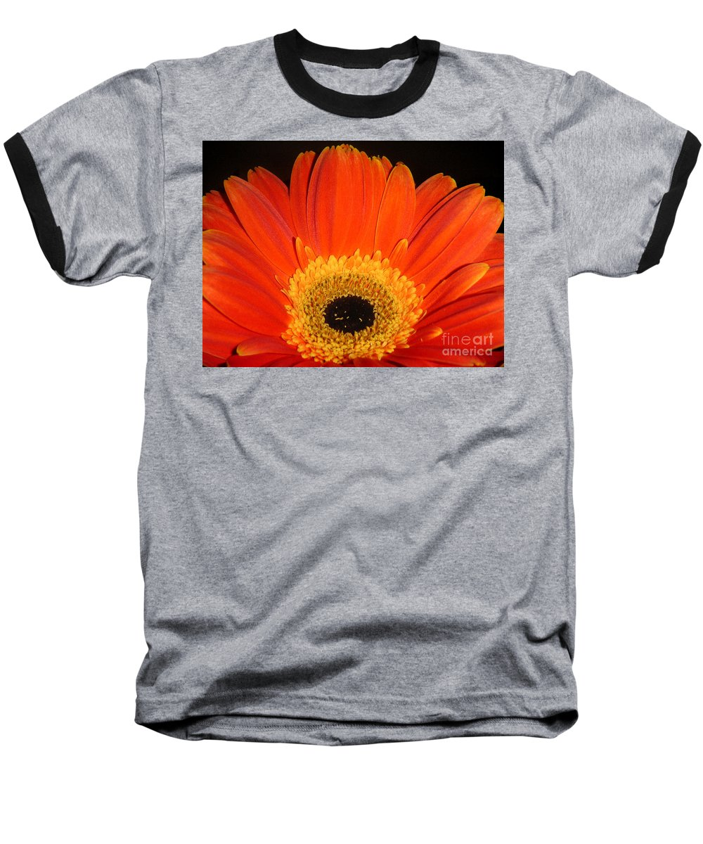 Nature Baseball T-Shirt featuring the photograph Gerbera Daisy - Glowing In The Dark by Lucyna A M Green