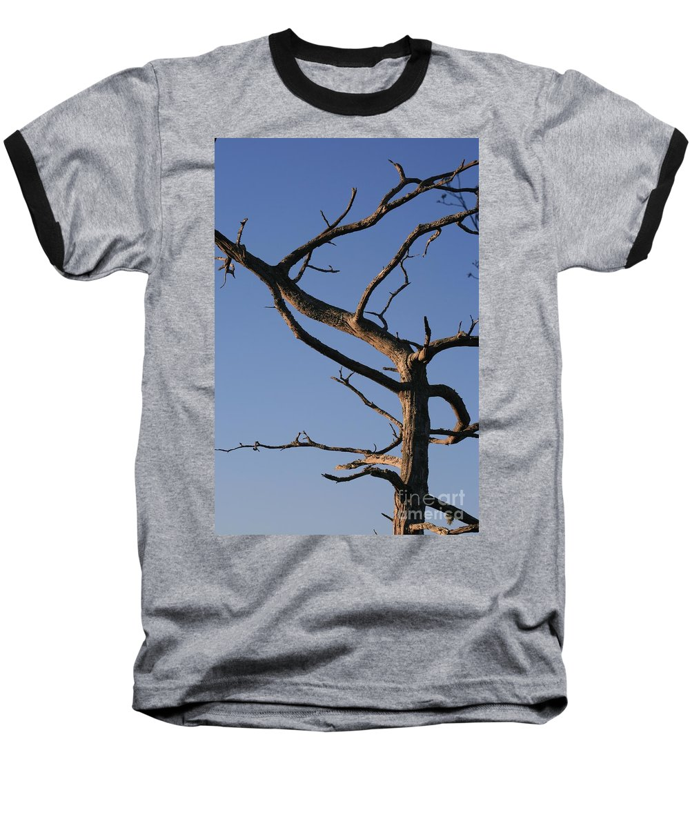 Tree Baseball T-Shirt featuring the photograph Gnarly Tree by Nadine Rippelmeyer