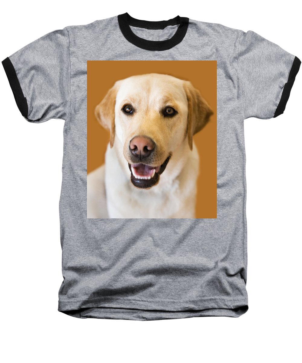 Lab Baseball T-Shirt featuring the photograph Golden Lab by Marilyn Hunt