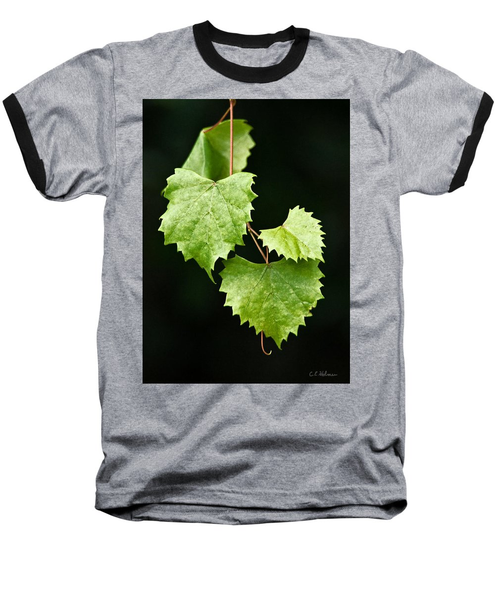 Flora Baseball T-Shirt featuring the photograph Green Leaves by Christopher Holmes