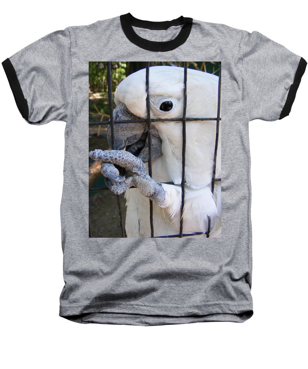 Bird Baseball T-Shirt featuring the photograph Hand Me The Key Please by Ed Smith