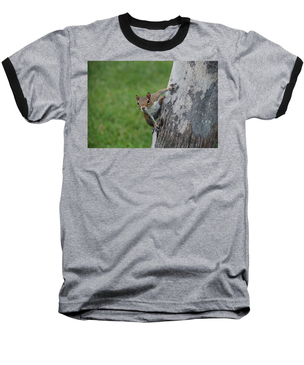 Squirrel Baseball T-Shirt featuring the photograph Hanging On by Rob Hans