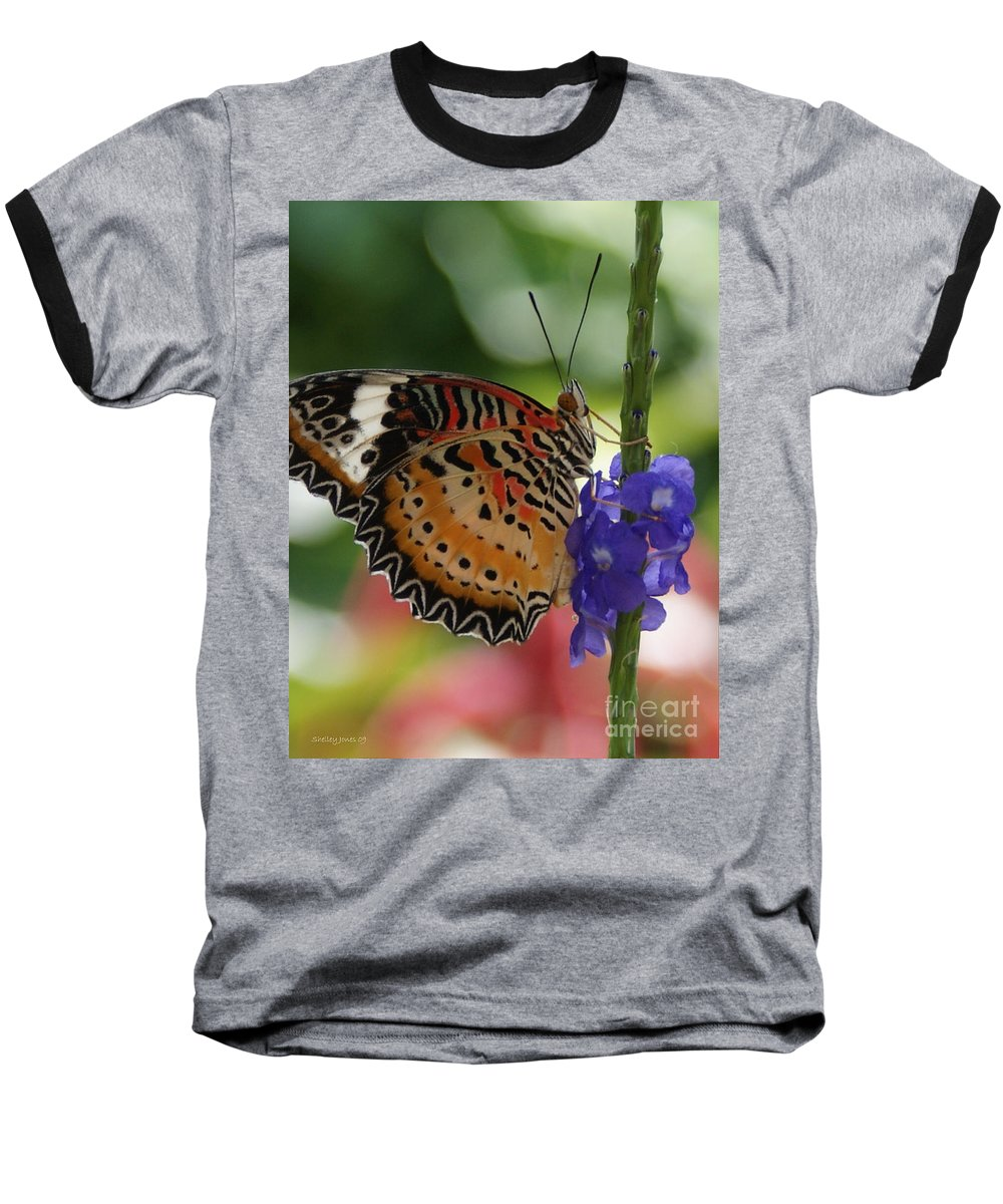 Butterfly Baseball T-Shirt featuring the photograph Hanging On by Shelley Jones