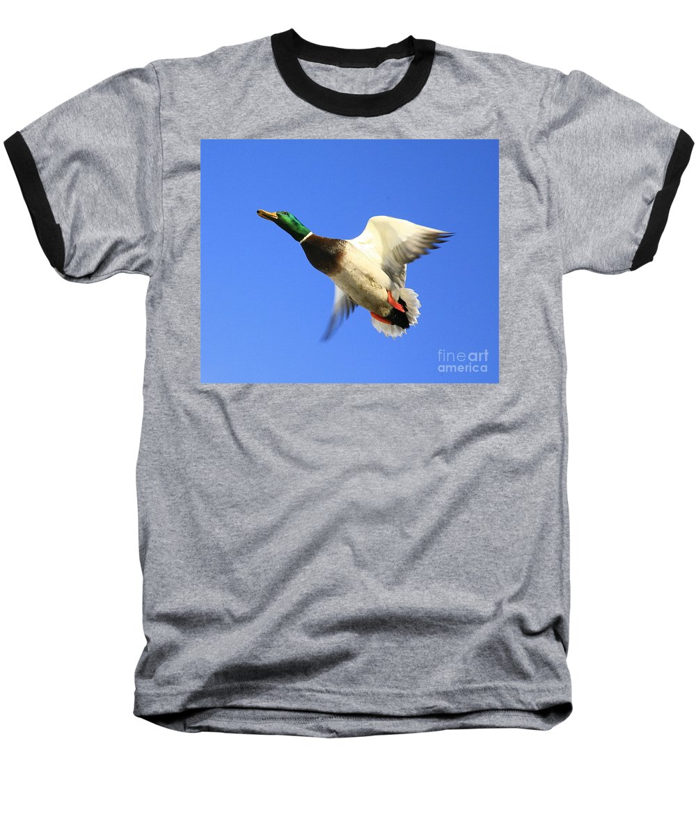 Duck Baseball T-Shirt featuring the photograph Heads Up by Robert Pearson