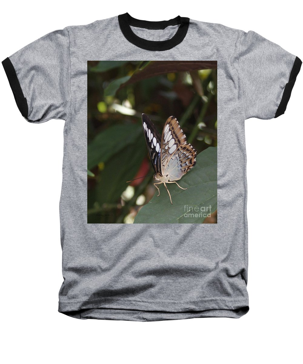 Butterfly Baseball T-Shirt featuring the photograph Hints Of Blue by Shelley Jones