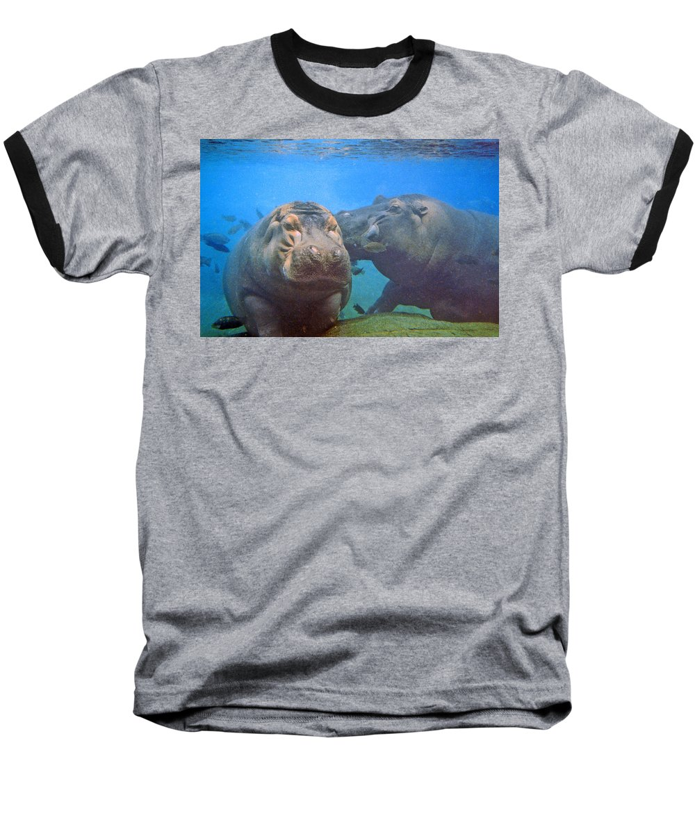 Animals Baseball T-Shirt featuring the photograph Hippos In Love by Steve Karol