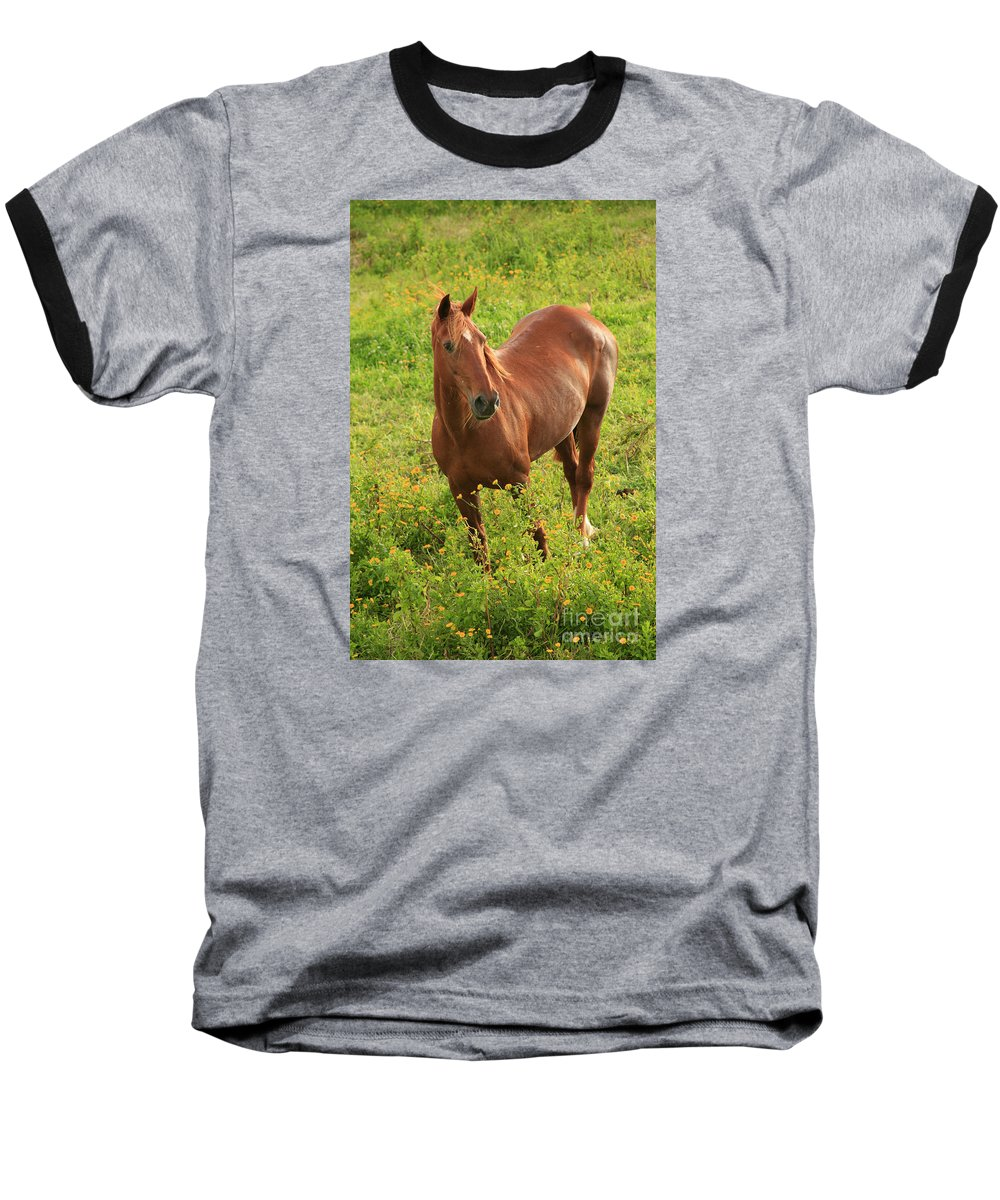 Animals Baseball T-Shirt featuring the photograph Horse In A Field With Flowers by Gaspar Avila