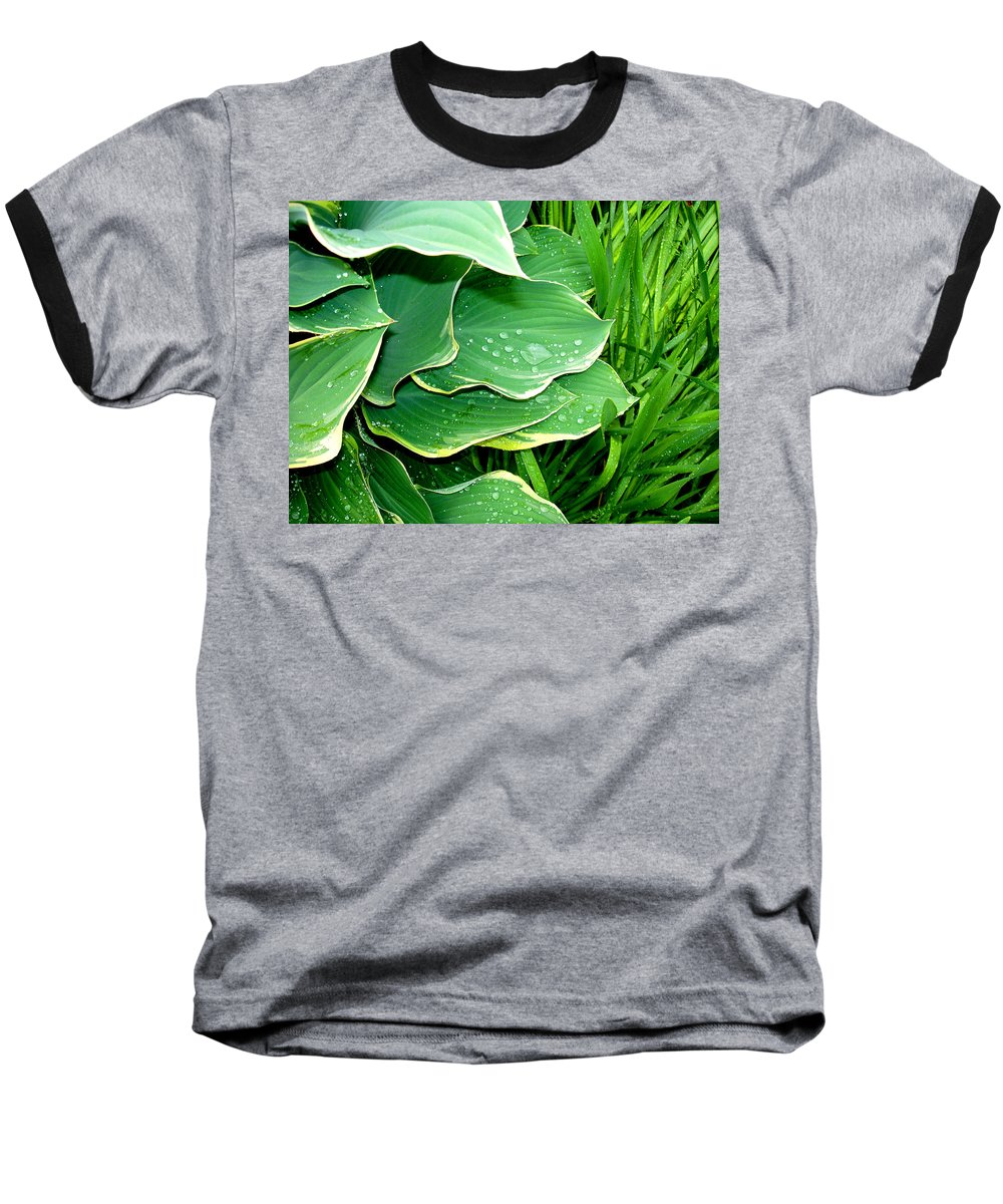 Hostas Baseball T-Shirt featuring the photograph Hosta Leaves And Waterdrops by Nancy Mueller