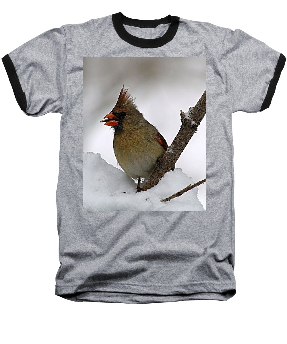 Bird Baseball T-Shirt featuring the photograph I Love Seeds by Gaby Swanson