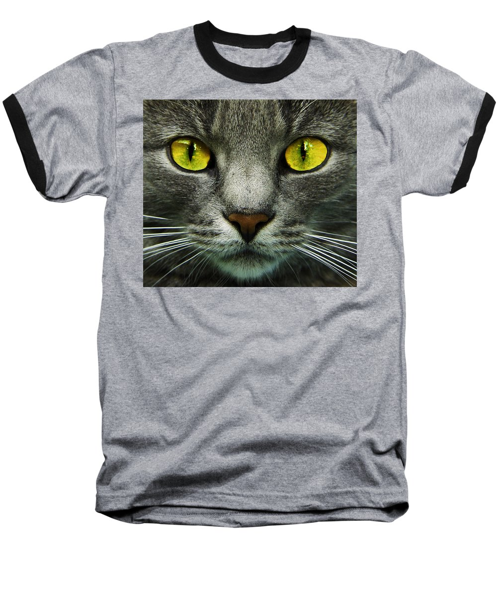 Cats Baseball T-Shirt featuring the photograph I.c.u. by Joachim G Pinkawa