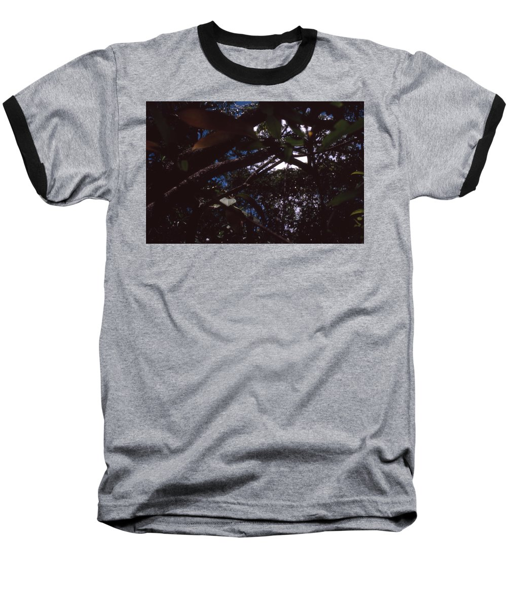 Bahia Baseball T-Shirt featuring the photograph In A Brazilian Forest by Patrick Klauss
