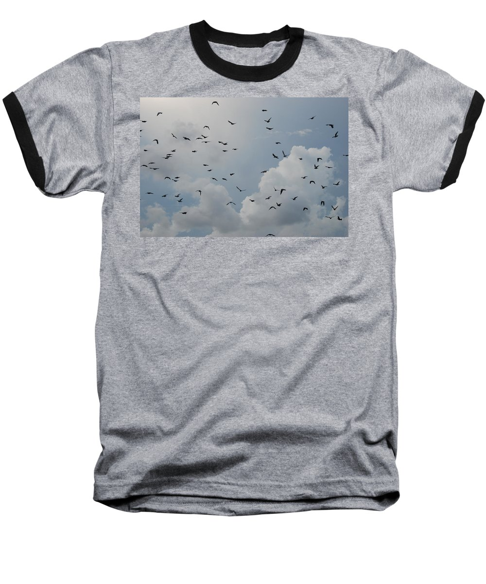 Birds Baseball T-Shirt featuring the photograph In Flight by Rob Hans