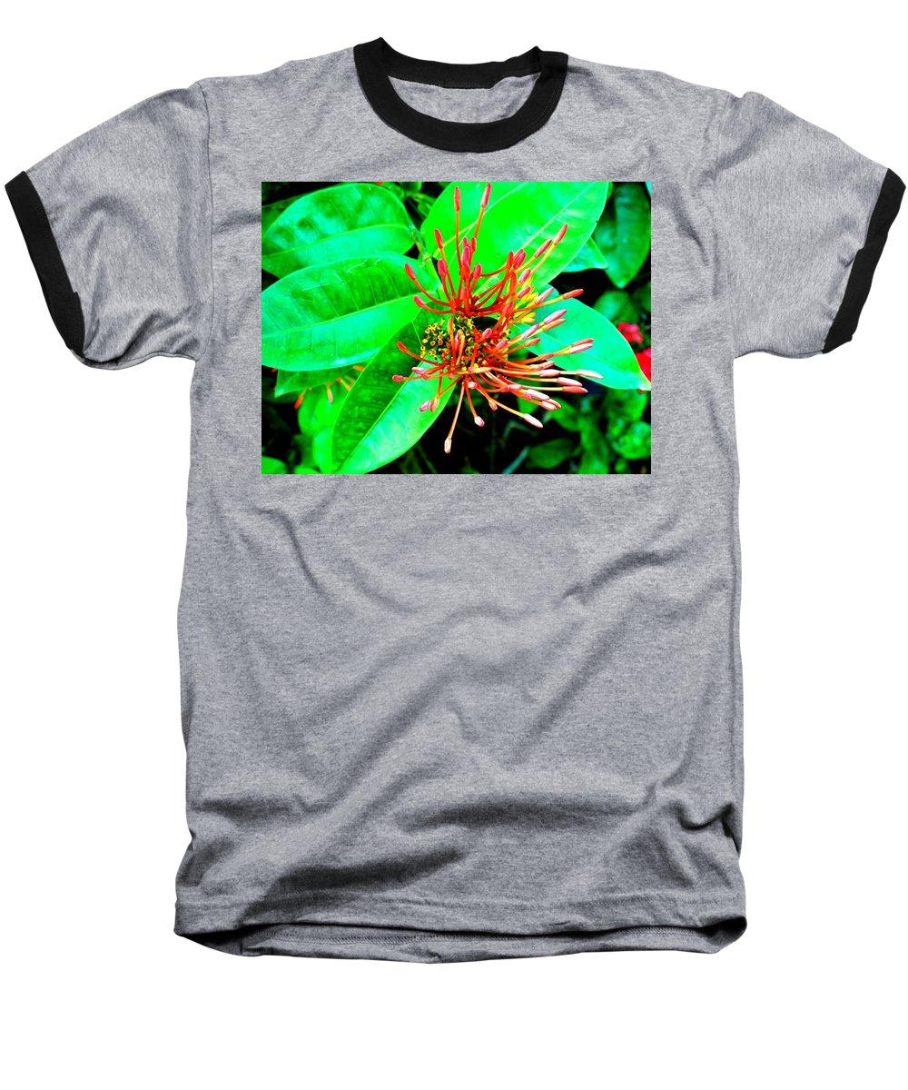 Flower Baseball T-Shirt featuring the photograph In My Garden by Ian MacDonald