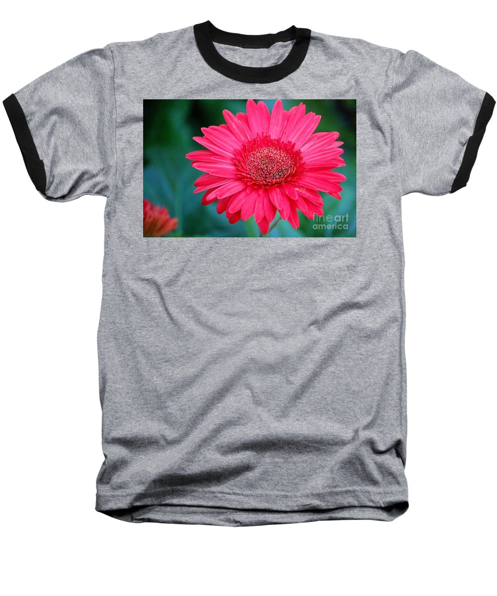 Gerber Daisy Baseball T-Shirt featuring the photograph In The Pink by Debbi Granruth