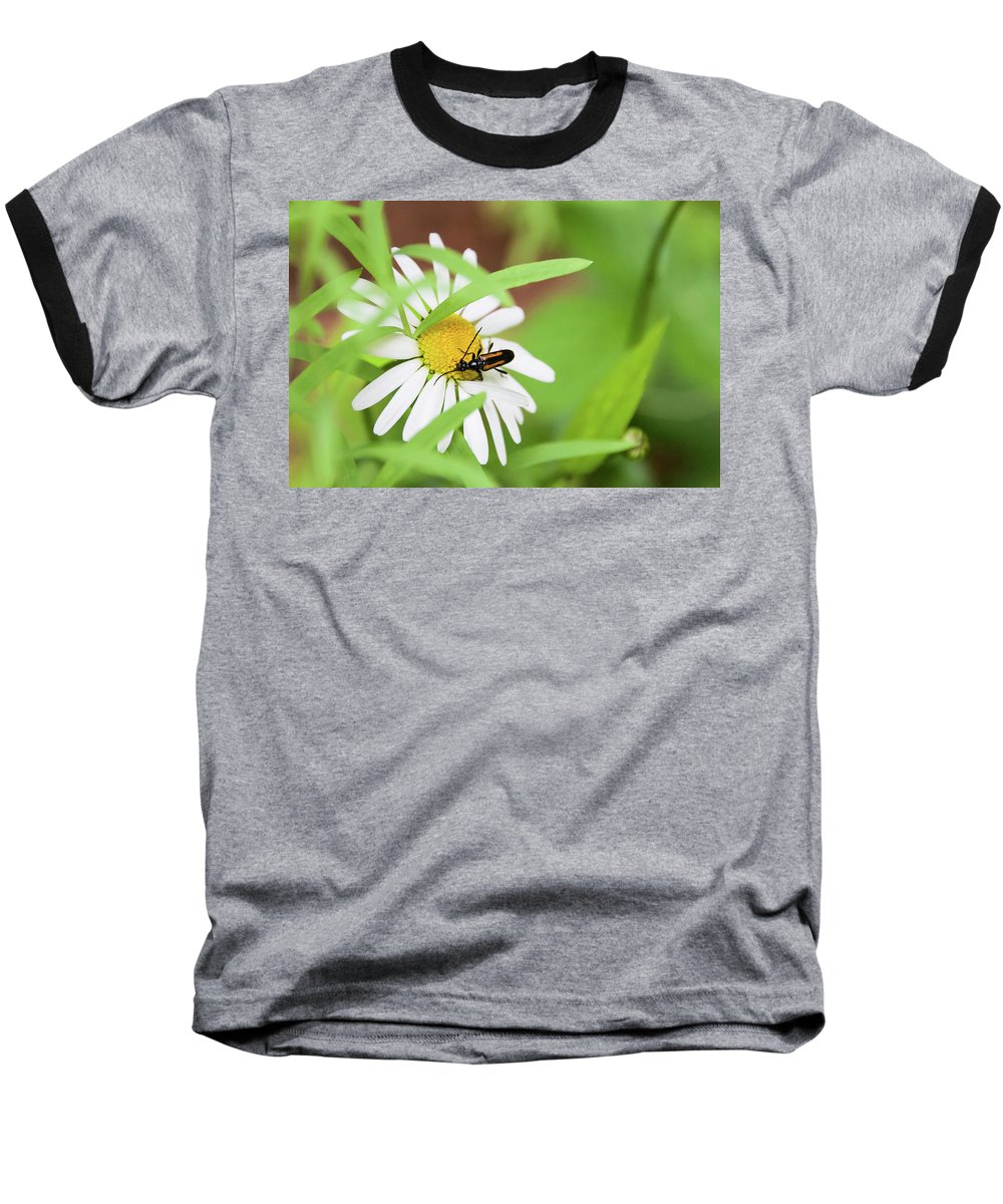 Flowers & Plants Baseball T-Shirt featuring the photograph Inl-8 by Ellen Lentsch