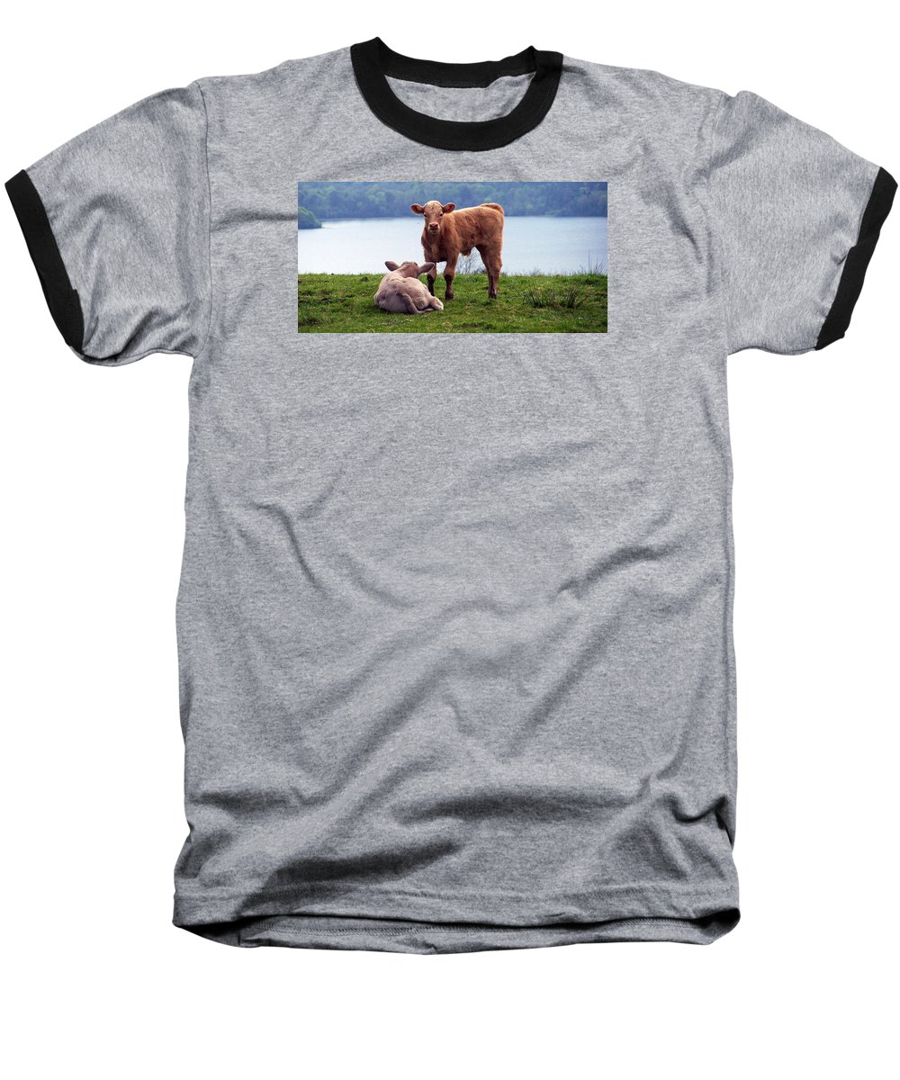 Ireland Baseball T-Shirt featuring the photograph Irish Calves At Lough Eske by Teresa Mucha