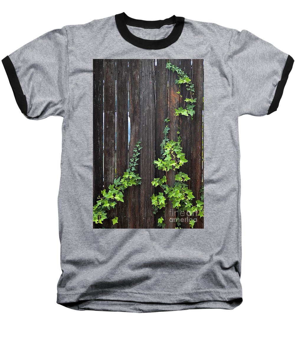 Clay Baseball T-Shirt featuring the photograph Ivy On Fence by Clayton Bruster