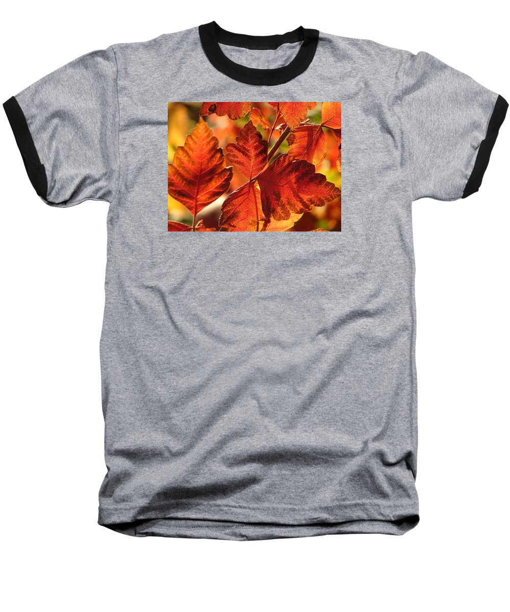 Photograph Baseball T-Shirt featuring the photograph Jack Painted My Yard by J R Seymour
