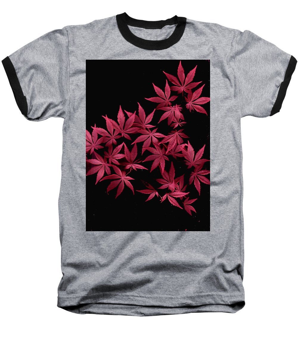 Japanese Maple Baseball T-Shirt featuring the photograph Japanese Maple Leaves by Wayne Potrafka