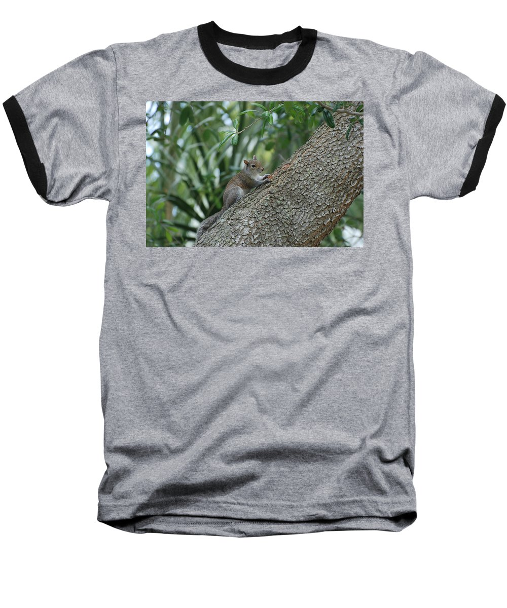 Squirrels Baseball T-Shirt featuring the photograph Just Chilling Out by Rob Hans