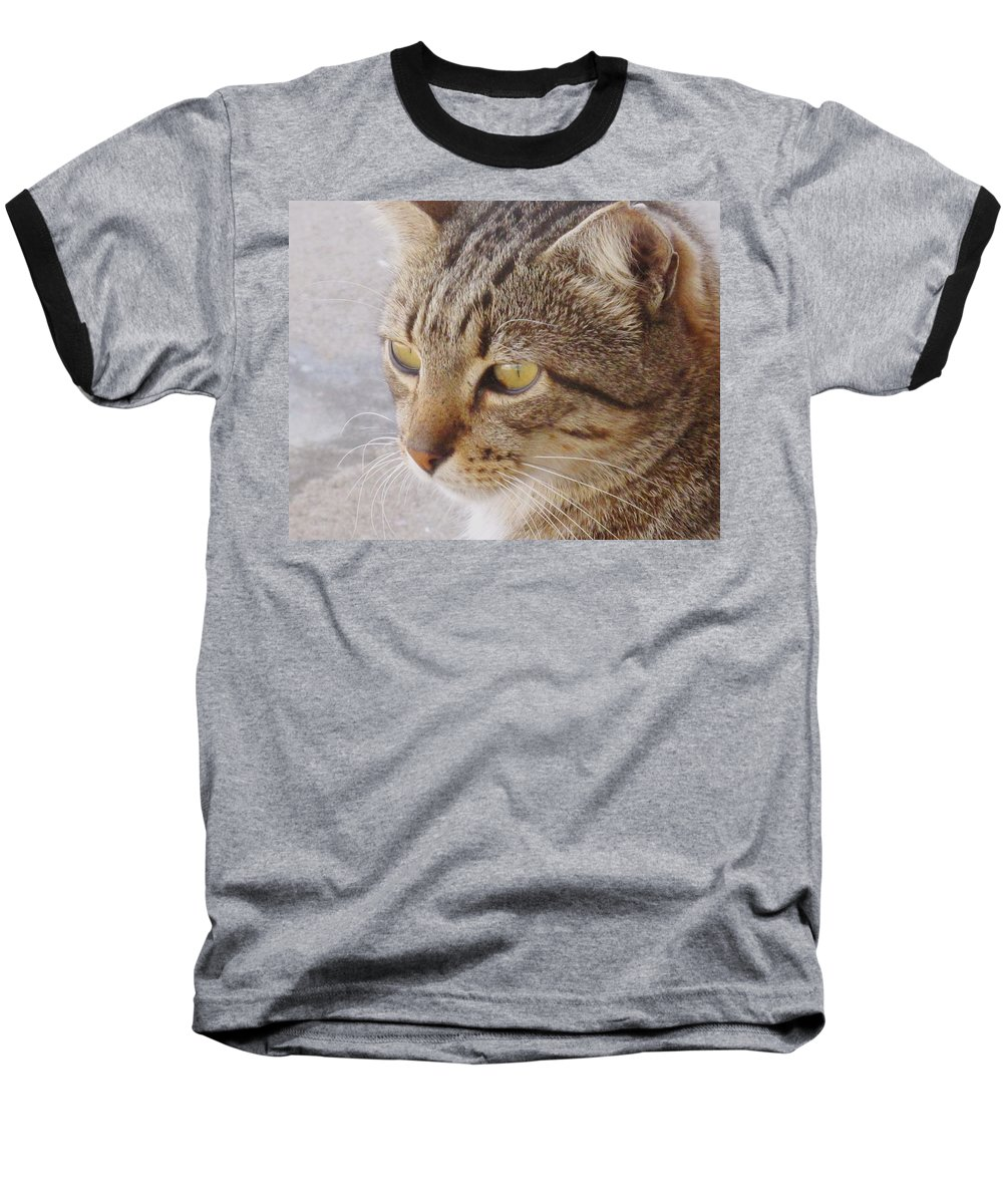 Cat Baseball T-Shirt featuring the photograph King Cat by Ian MacDonald