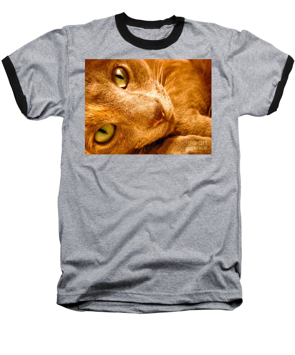 Cats Baseball T-Shirt featuring the photograph Kitty by Amanda Barcon