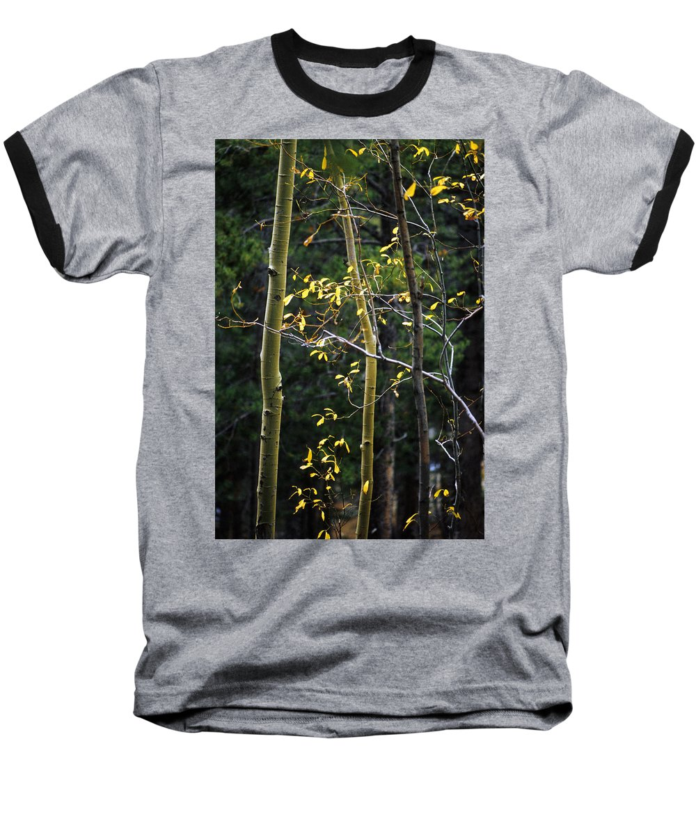 Aspen Baseball T-Shirt featuring the photograph Late Aspen by Jerry McElroy