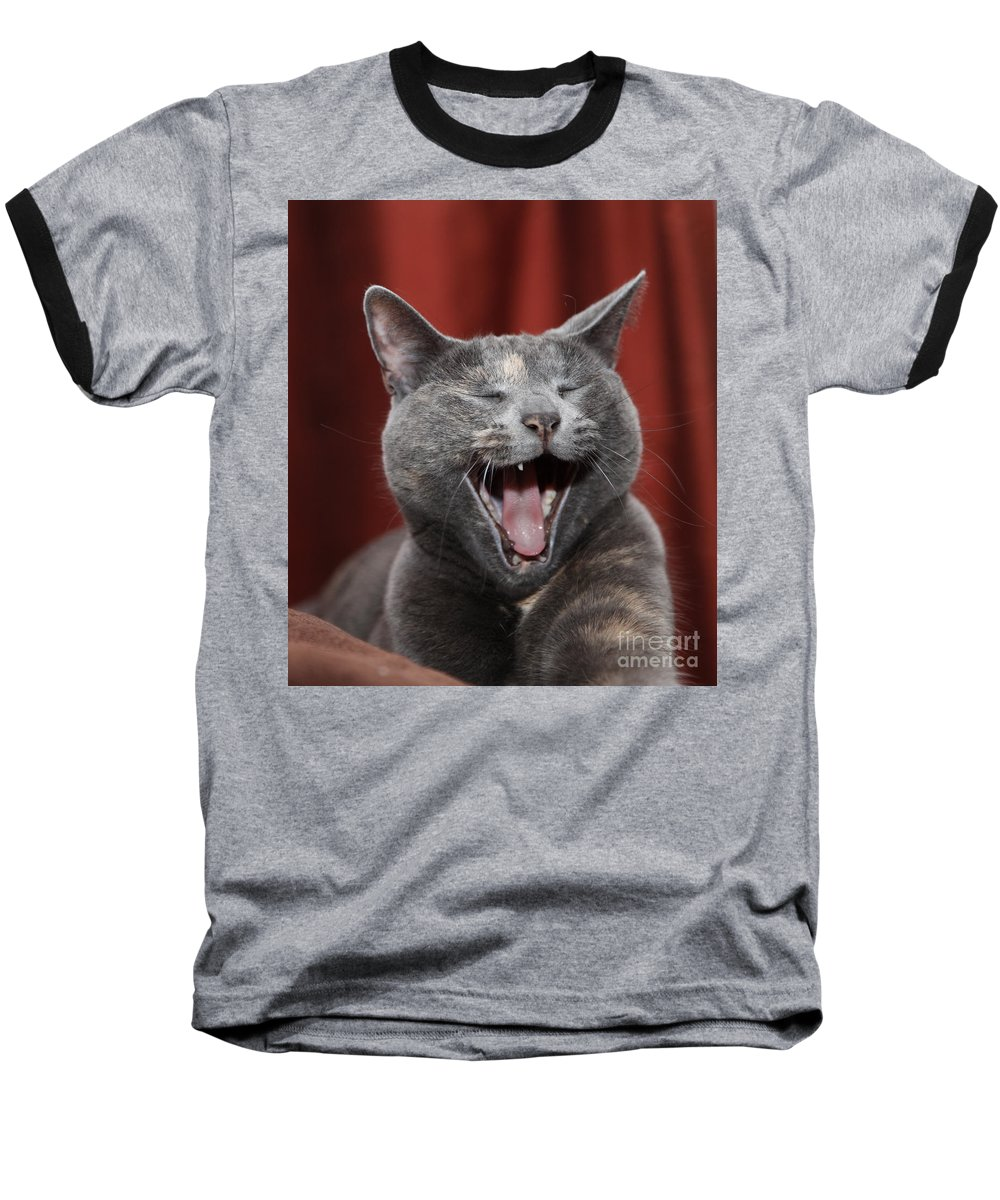 Kitty Baseball T-Shirt featuring the photograph Laughing Kitty by Amanda Barcon