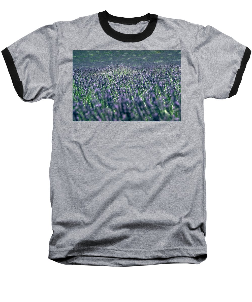 Lavender Baseball T-Shirt featuring the photograph Lavender by Flavia Westerwelle