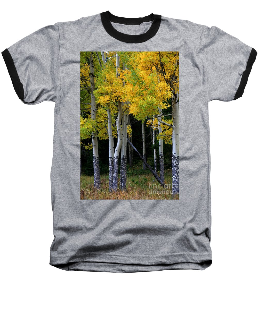 Aspens Baseball T-Shirt featuring the photograph Leaning Aspen by Timothy Johnson