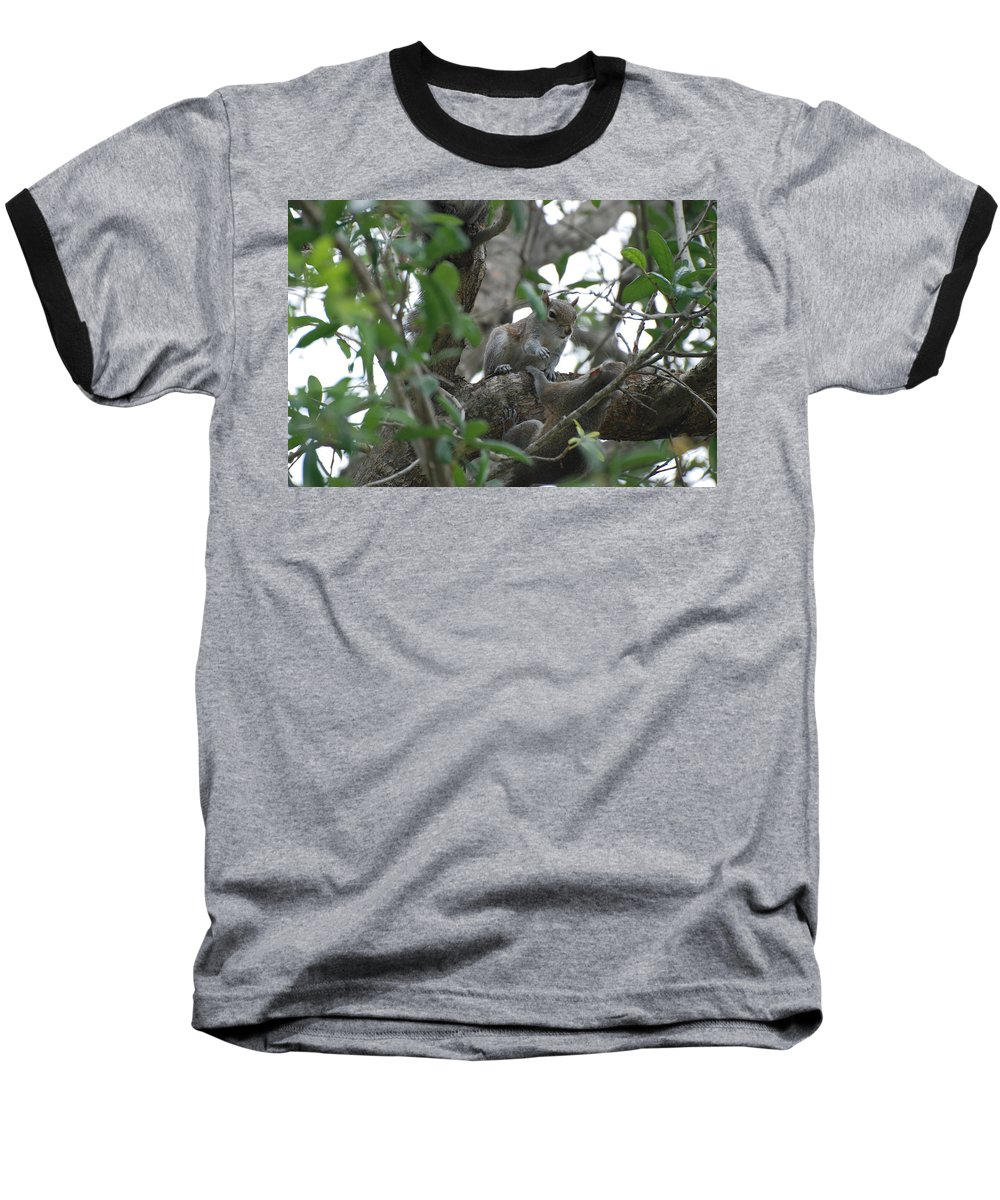 Squirrel Baseball T-Shirt featuring the photograph Lending A Helping Hand by Rob Hans