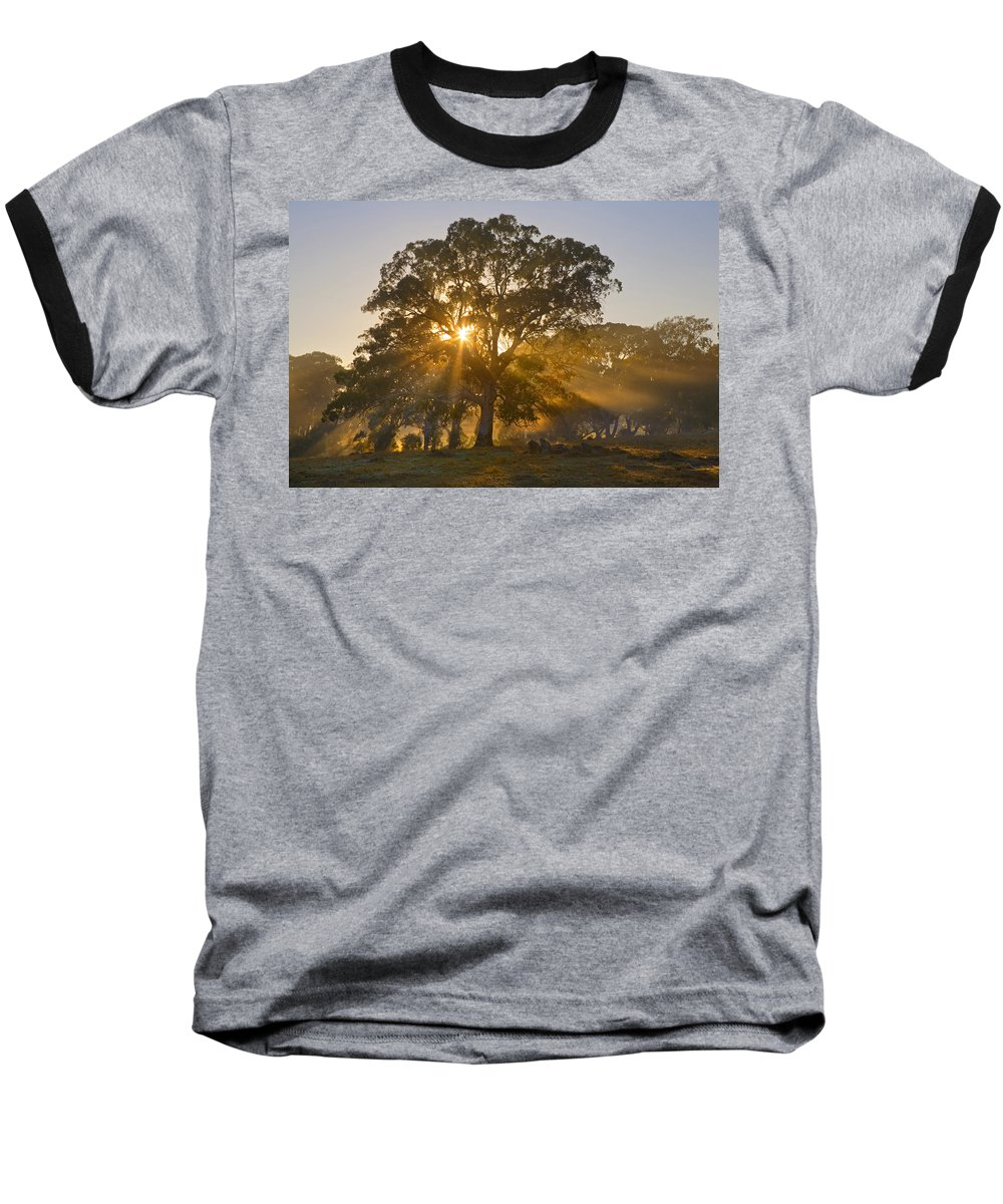 Tree Baseball T-Shirt featuring the photograph Let There Be Light by Mike Dawson