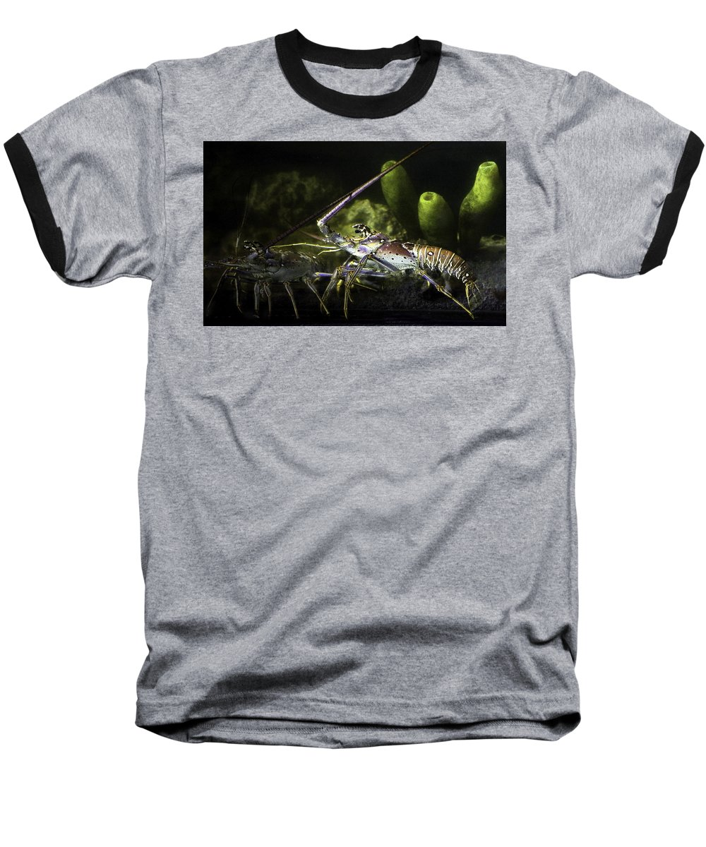 Lobster Baseball T-Shirt featuring the photograph Lobster In Love by Marilyn Hunt