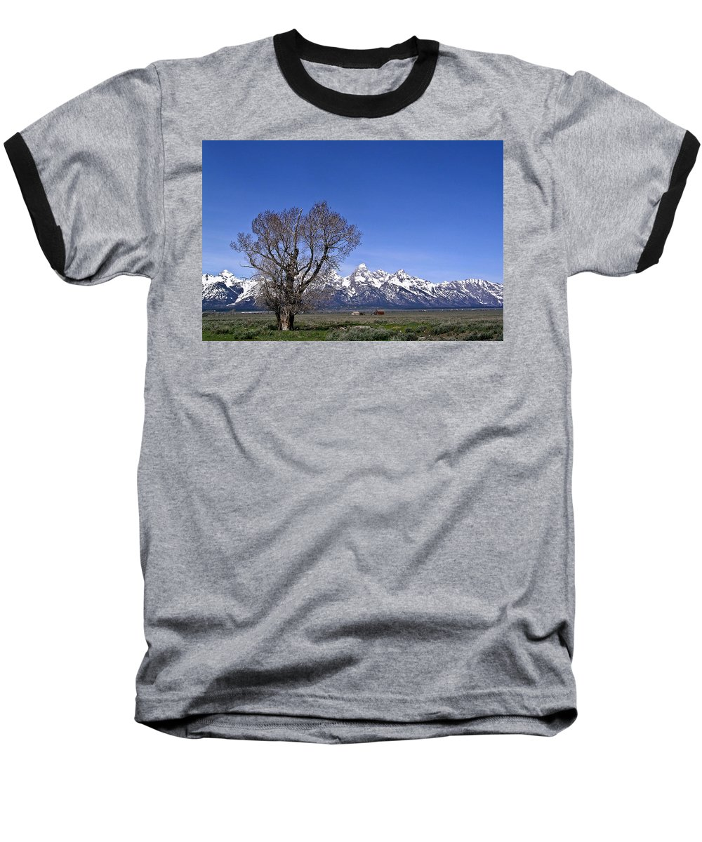 Tree Baseball T-Shirt featuring the photograph Lone Tree At Tetons by Douglas Barnett