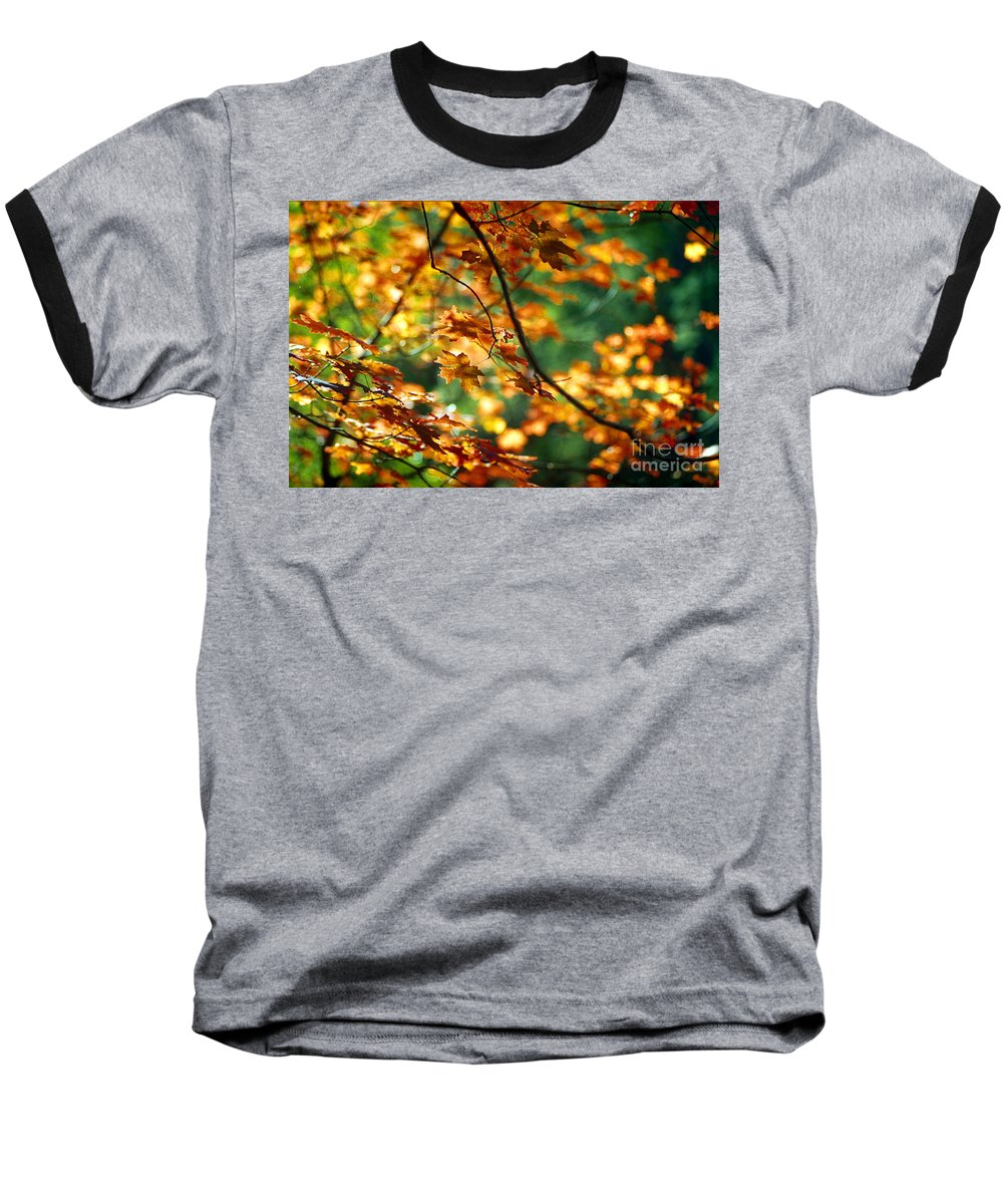 Fall Color Baseball T-Shirt featuring the photograph Lost In Leaves by Kathy McClure