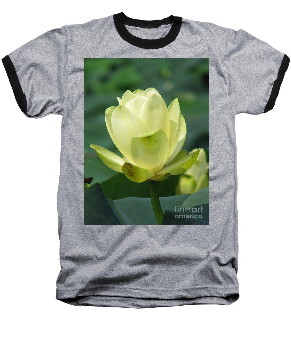 Lotus Baseball T-Shirt featuring the photograph Lotus by Amanda Barcon