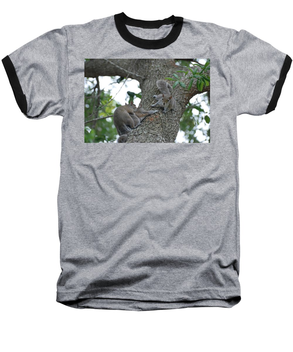 Squirrel Baseball T-Shirt featuring the photograph Luck Be A Lady by Rob Hans